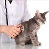 Ветеринарные клиники в Ершове